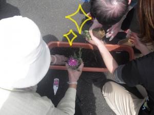 花の植え付け11