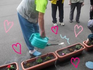 花の植え付け15