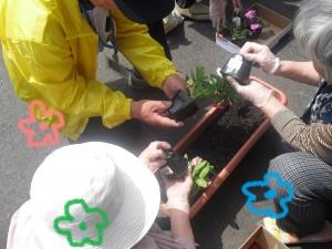花の植え付け7